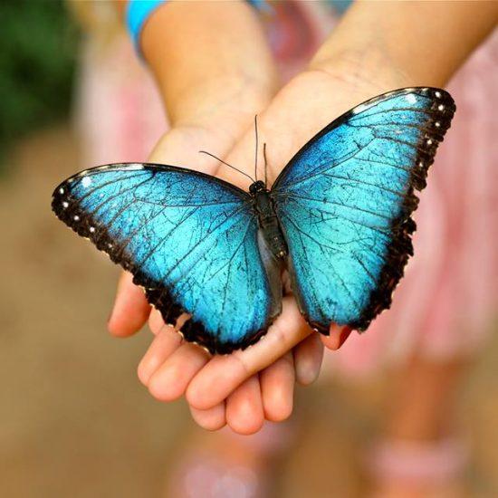 Mariposario Benalmadena Butterfly Park